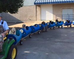 Retired Man Builds 'Dog Train' To Take Rescue Pups On Rides