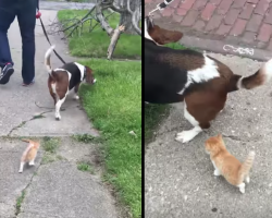 Family's Taking A Walk When A Feral Kitten Decides To Follow The Dog Home