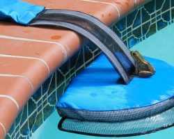Man's Invention Is Saving Small Wild Animals From Drowning In Pools