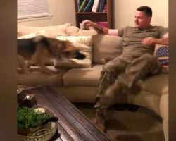 German Shepherd Thought Soldier Dad Abandoned Her Holding Nothing Back On Day Of Reunion