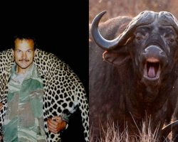 Trophy Hunter Fatally Gored In Groin By Herd Mate Of Buffalo He'd Just Killed