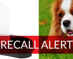 BREAKING: IKEA Pet Water Fountain Recalled After Two Dogs Suffocated To Death