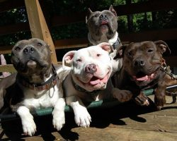 16 Reasons Pit Bulls Are Not The Friendly Dogs Everyone Says They Are