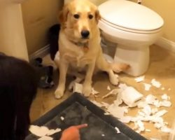 """Mom Walks And Asked The Dog What Happened – The Dog's """"Answer"""" Has Gone Viral"""