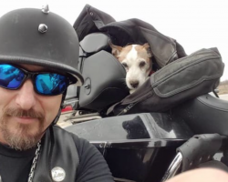 Biker Sees A Dog Being Abused On The Side Of The Road And Immediately Pulls Over