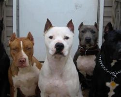 14 Signs You Are A Crazy Pit Bull Person