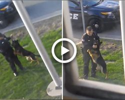 Watch How This Police Officer Abused This K9 Dog. I Am Thankful That He Got Caught.