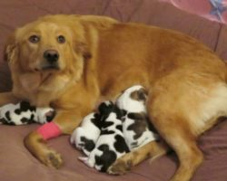 Proud Mommy Dog Left Confused When She Gives Birth to Four Baby Cows