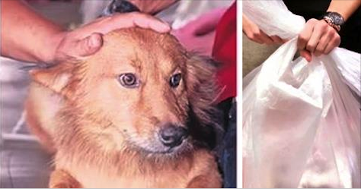 Dog Drags Garbage Bag Back Home – But Its Contents Shocked His Owner