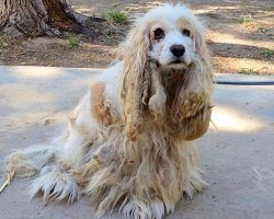 Abandoned Dog Undergoes Amazing Transformation
