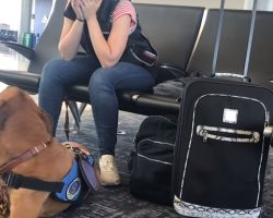 Service Dog Suddenly Spots Owner Start To Shake. Next Move Instantly Goes Viral