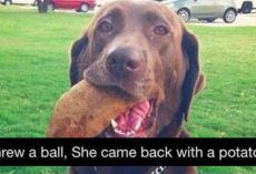 17 Dogs Who May Not Be The Sharpest Tools In The Shed