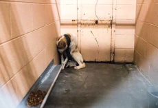 Sad Dog Sits In The Corner Of Kennel But Totally Opens Up When Belt Is Removed From Neck