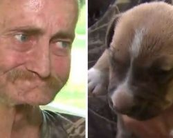 Dying Man Has A Final Wish To Find His Dogs A Good Home
