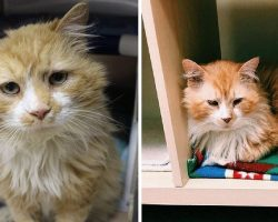 Cat walks 12 miles back to his family – gets a heartbreak when they ask shelter to euthanize him
