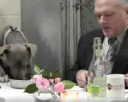 Shelter Dog Was Too Scared To Eat, So Vet Goes Above And Beyond To Help