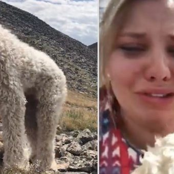 Woman Reunites with Her Frightened Lost Dog Weeks After Fatal Car Crash