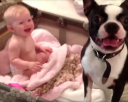 Mom Tells Dog To Get Out Of The Crib, And He Adorably Disobeys Her