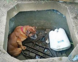 Little Girl Runs To Get Help After Finding Dog In A Concrete Grave
