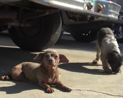 Senior Dog Is Dumped On The Street—Along With A Friend—For Having A Tumor