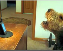 Dog Misses Mom So He Calls Her On The Phone, She Can't Stop Laughing At What He Has To Say