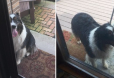 Every Day, This Dog Walks 4 Blocks On His Own Just To See His Senior Friend