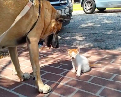 Dog Refused To Leave Blind Kitten's Side Until She Was Rescued Off The Street