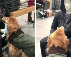 Watch This Sweet Golden Retriever Try to Befriend a Mannequin