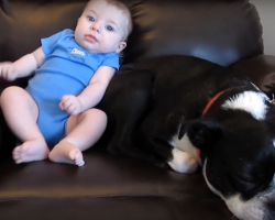 Dog Loves Sitting By His Baby Brother — Until He Poops His Pants