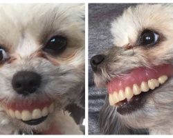 Man's Dentures Go Missing, Then Discovers Dog Sporting A New Smile