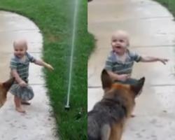 German Shepherd Afraid Of Water Sprinkler Until Toddler Shows Him It's OK