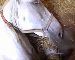 Heroes Rescue Horse Who Accidentally Fell Into A Maintenance Pit In Barn