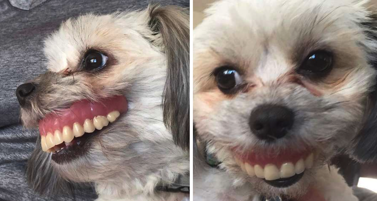 Man Wakes Up To Missing Dentures, Finds Dog With A Brand New Smile