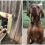 2 Neighbor Dogs Become Soulmates– Their Humans Install Fence Door So They Can Be Together