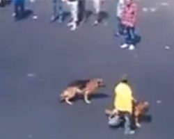 Punk Decides It Would Be Funny To Throw Bricks At 2 Innocent Dogs — Then Karma Strikes Back