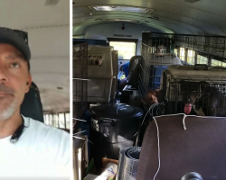 Man Buys School Bus To Save Shelter Pets Left Behind During The Hurricane