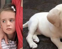 Evil Thieves Stole New Puppy From Loving Family…But They Didn't Know Puppy's Big Secret