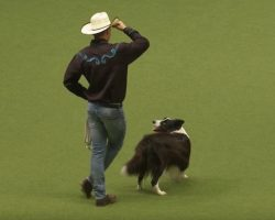 Border Collie Grabs a Lasso and Line Dances With 'Cowboy' in Fun Dance Routine