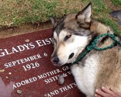 Heartbroken Therapy Dog Can't Stop Sobbing As He Lays On His Grandma's Grave