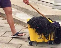 This Pup Went As A Mop For Halloween And The Internet Can't Stop Laughing
