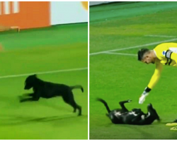 Black Lab Runs Onto Soccer Field Mid-Game, Interrupts Players For Belly Rubs