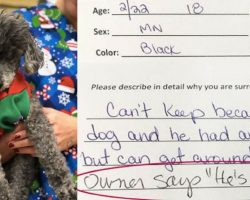 Owners Surrender Senior Dog For Being 'Stupid', But Dog Finds Love With New Owner