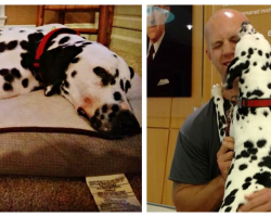 Firefighter Adopts Dalmatian With Special Gift, Is Then Forced To Let Her Go