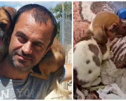 Man Finds 500 Abandoned Starving Dogs, Sells Everything To Help Them