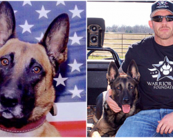 """Navy SEAL Rescues """"Unadoptable"""" Retired Military K9s, Helps Them Adjust To New Life"""