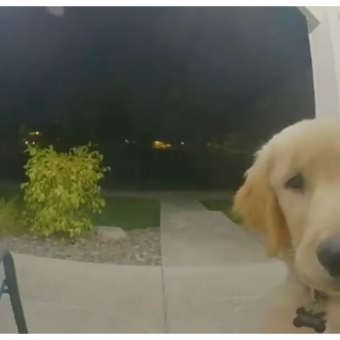 Puppy Escapes His Home And Instantly Regrets It & Rings Doorbell To Get Back In