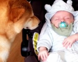 Mom Captures Video Of Her Dog Babysitting Newborn, Viewers Fall In Love