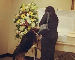 Dog Stops At Owner's Casket To Say Goodbye and The Family Gets Emotional