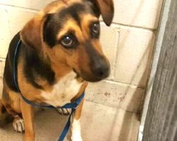Family Dumps Dog At High-Kill Shelter So They Could Take A New Dog On Vacation