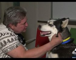 Woman Finally Decides To Give Man His Missing Service Dog Back. The Reunion Is Pure Magic!